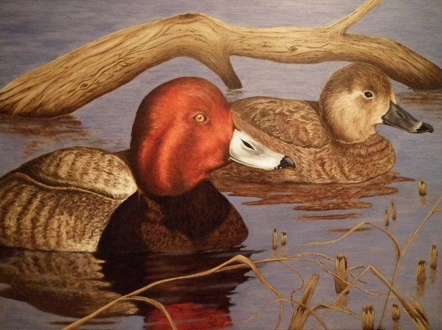 Riverside Redheads by deerhunter2012