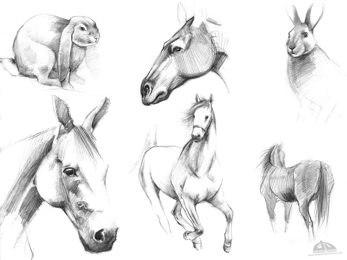 horse rabbit sketch by nakoot on deviantart