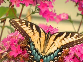 Butterfly by Artistii