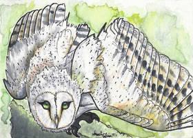 Barn Owl ACEO