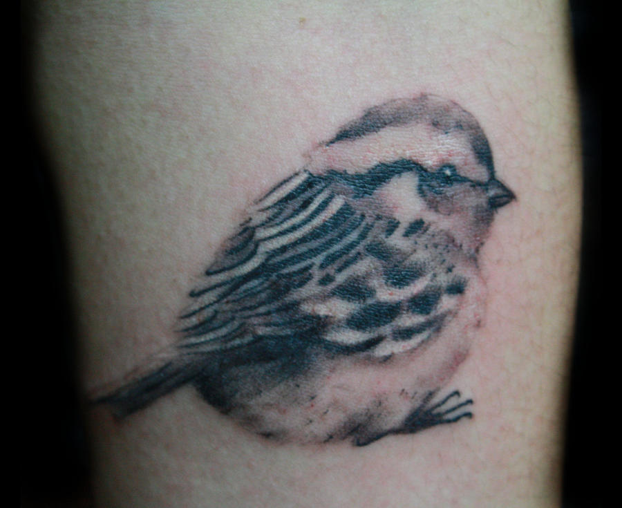Sparrow by McTats