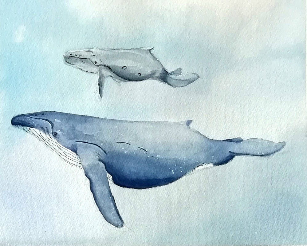 watercolor whales #1