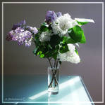 Bouquet of Lilac 1 by AnnaZLove