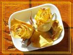 Dry yellow roses