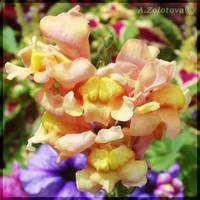 Garden Snapdragon by AnnaZLove