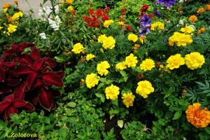 In summer garden by AnnaZLove