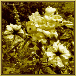 Snapdragon and Petunia. Monochrome by AnnaZLove
