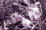 Meekness. Monochrome