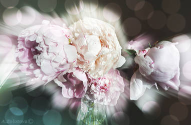 The glow of Peonies by AnnaZLove