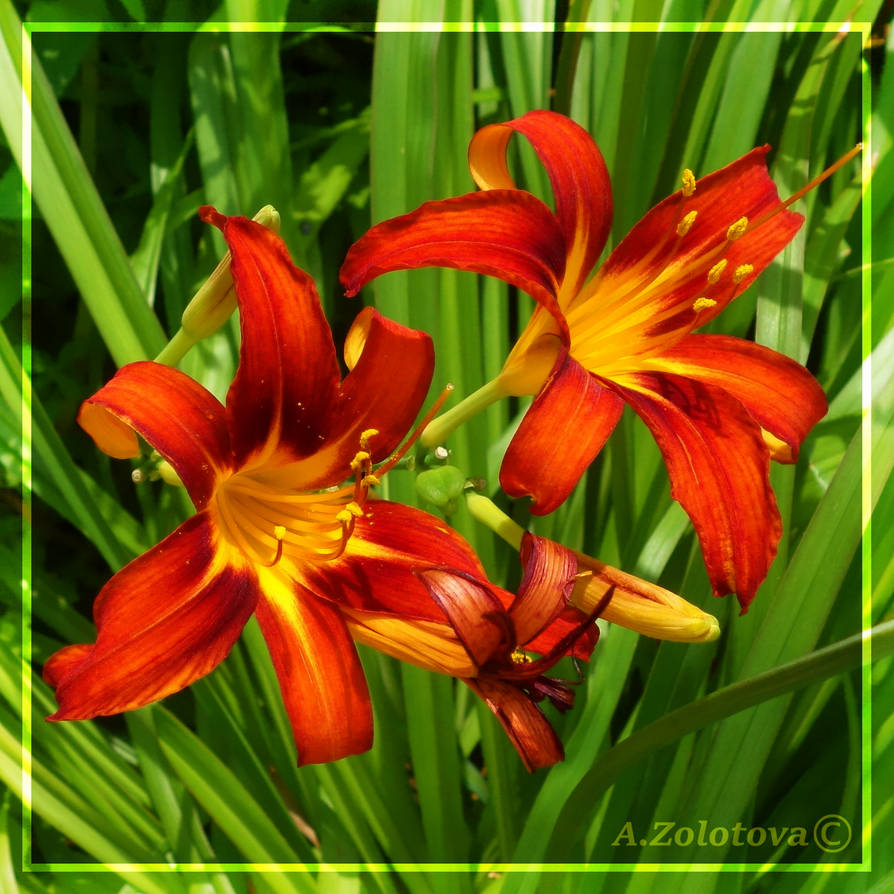 Garden Day lilies 2 by AnnaZLove