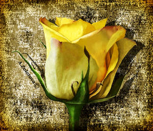 Small yellow rose by AnnaZLove