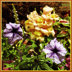 Snapdragon and Petunia