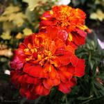 Flower whispers. Original color