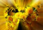 Solar energy of dandelions