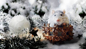 The Year of White Metal Rat