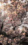 In Autumn Park. Sunset color
