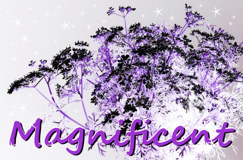 Magnificent. Invert. Purple