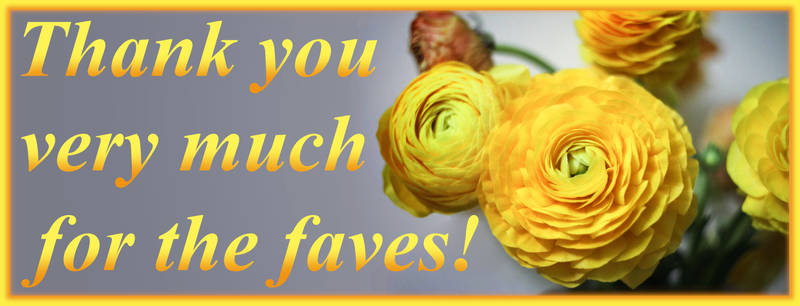 Thank you very much for the faves! Rananculus