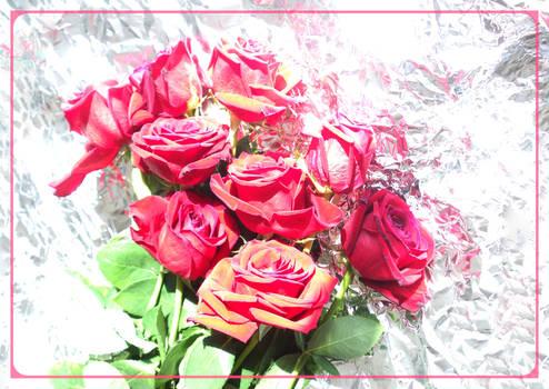 Fallen Roses. Ruspberry color