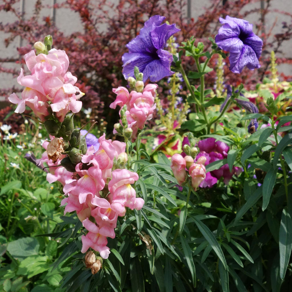 In the city garden