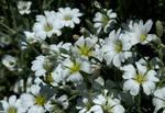 Floral Paradise 1