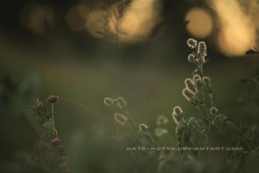 Photo 272 by Kate-Kotya