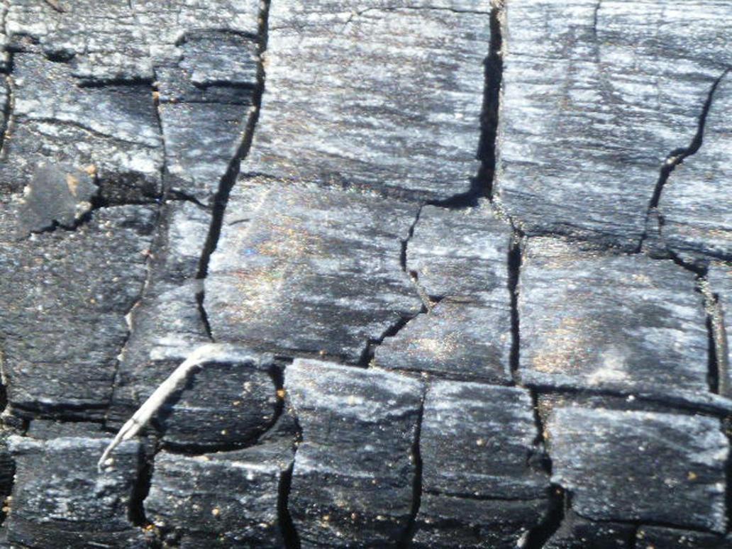 Burnt Wood by EightStock