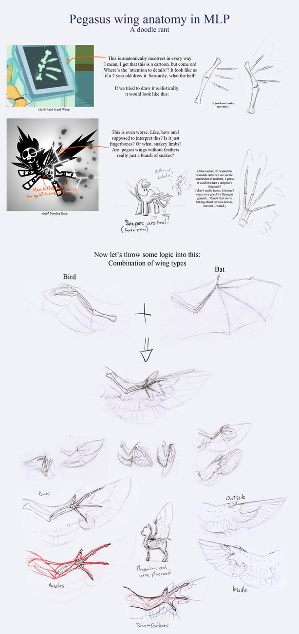 doodle rant mlp pegasus wing anatomy by thespectral wolf on deviantart
