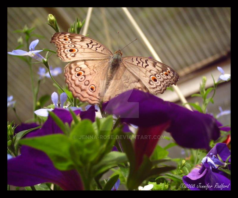Butterfly House III by Jenna-Rose