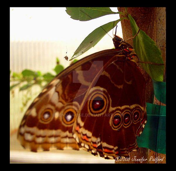 Butterfly House IX by Jenna-Rose