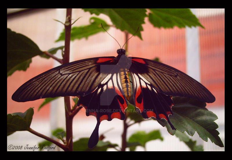 Butterfly House XIV by Jenna-Rose