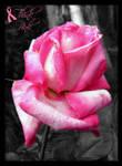 Think Pink - Rose by Jenna-Rose