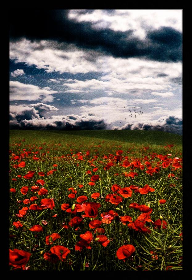 In Flanders Fields... by Jenna-Rose