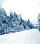 Blue Winter Stock Background I