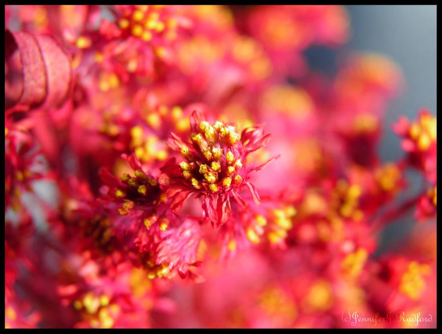 Flowers Like Fireworks by Jenna-Rose