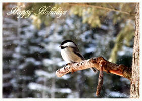 Happy Holidays Chickadee