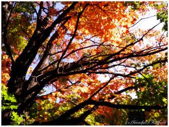 Autumn Above Us