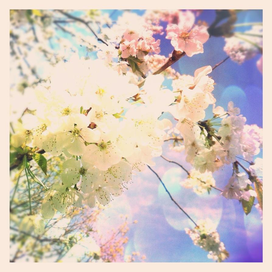 Blossom by Nitr0glycerin