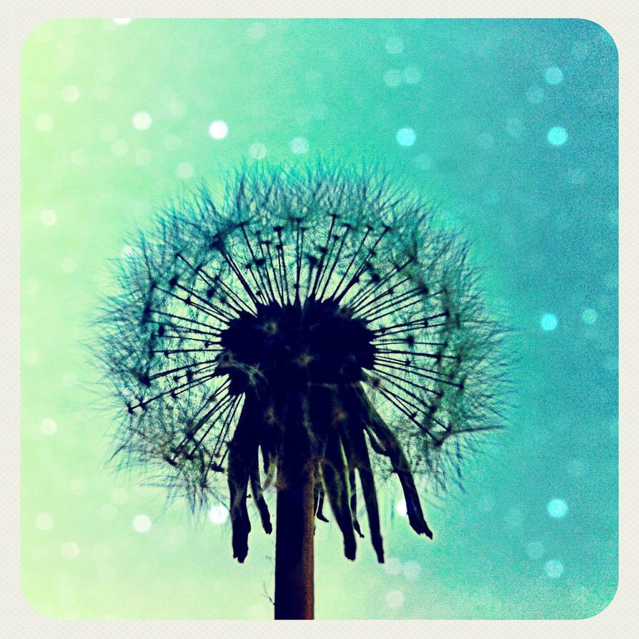 Dandelion by Nitr0glycerin