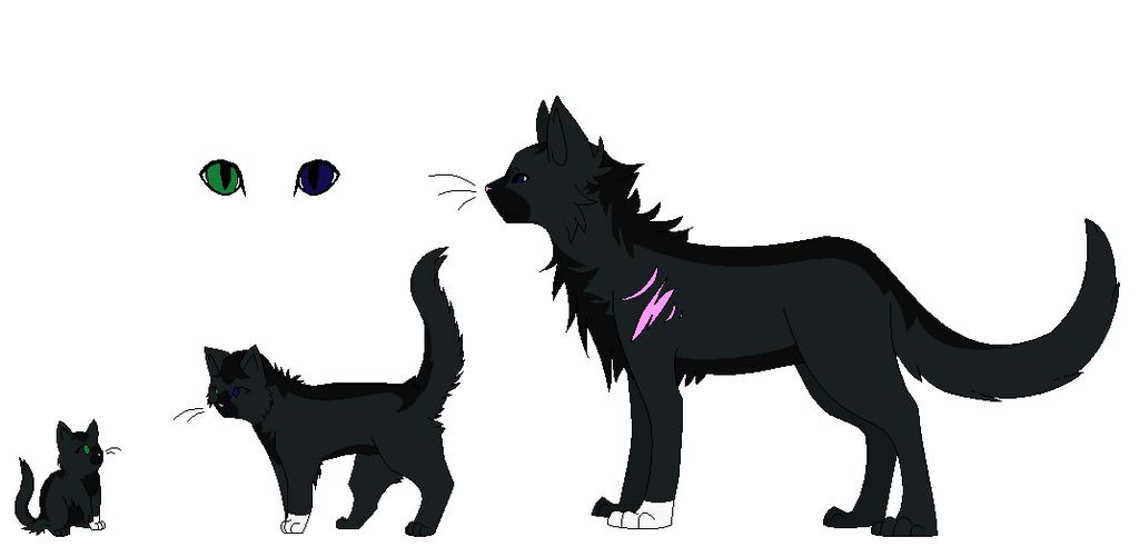 Warrior Cats Ashkit
