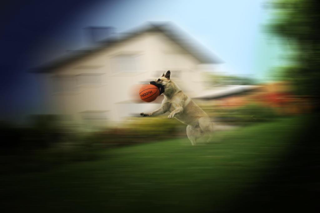 Superdog by Valegrim