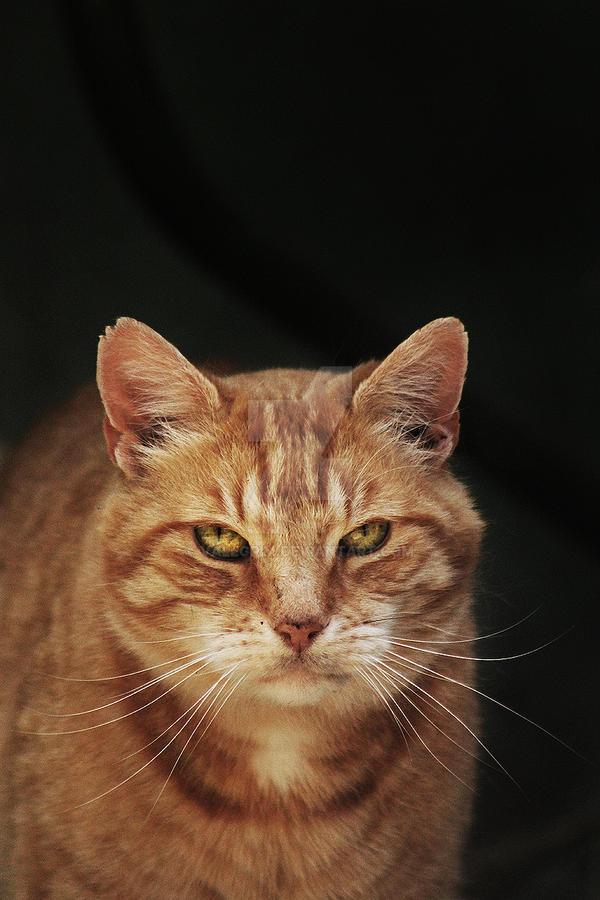 Cat by Valegrim
