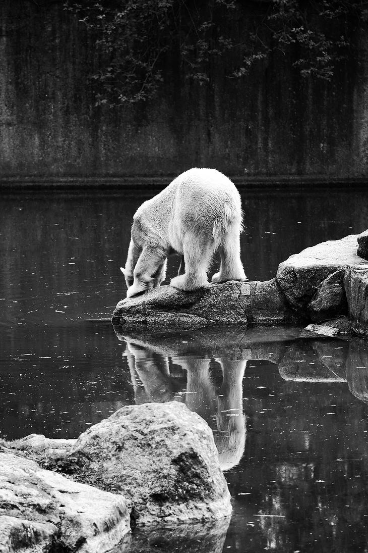 Polar bear by Valegrim