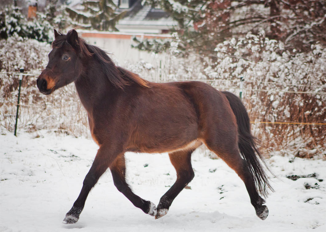 Horse Stock 002 by Valegrim
