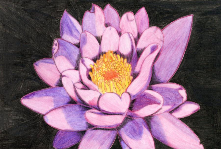 Lotus flower drawing by midniteoil burning on deviantart lotus flower drawing by midniteoil burning mightylinksfo