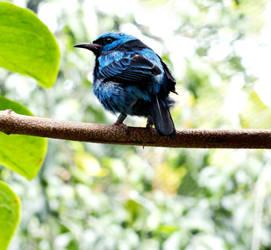 Blue Bird by Von186