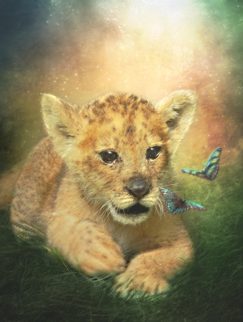 Baby Lion by MariLucia