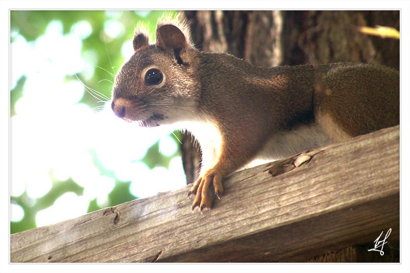 Mini Squirrel by facist