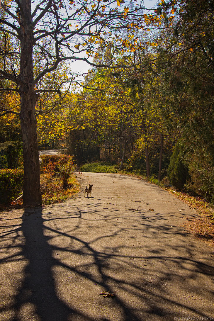Fall by ZiCompton