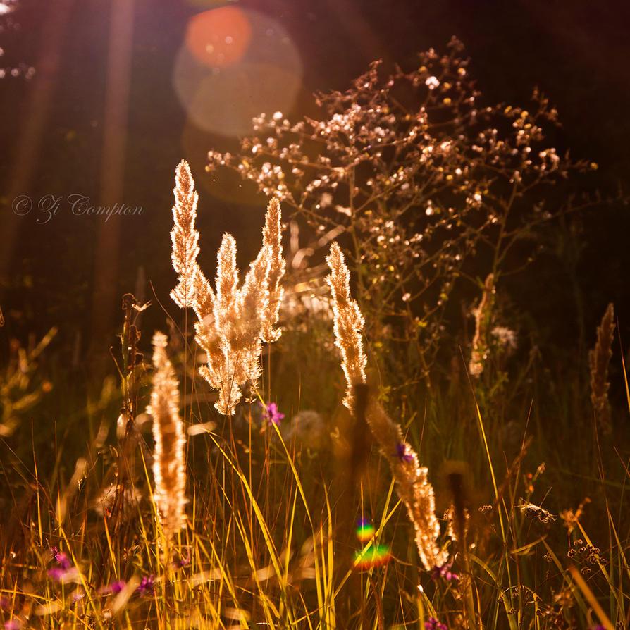 Golden August by ZiCompton